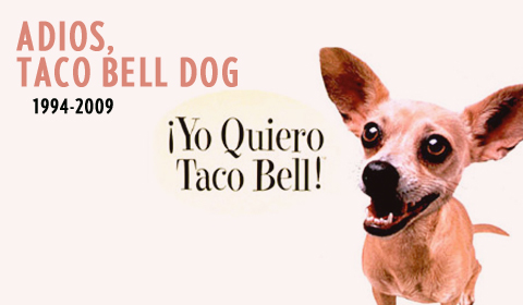 taco bell dog. Taco Bell Dog Dies of Stroke