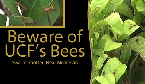 Bees Swarm UCF Bushes, Garbage Near Marketplace Dining Hall