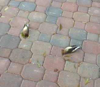 UCF Dead Bird Mystery Gains Statewide Media Attention | KnightNews com