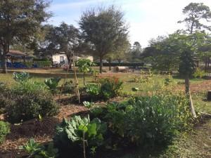 UCF Creative School for Children new garden area flourishes.