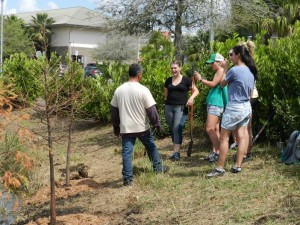 Numerous University of Central Florida students and staff celebrate UCF's Arbor Day on March 17 by planting native trees at the pond near Garage H. Students also engaged in learning through a walking tree tour around campus and a nature trail at Lake Claire.
